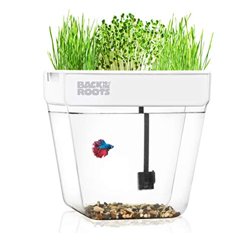 Back to the Roots Water Garden Aquarium, Fish Tank That Grows Plants, One of 2018's Top Holiday Gifts, Gardening Gifts, Teachers Gifts, Unique Gifts, Mini Aquaponic Ecosystem